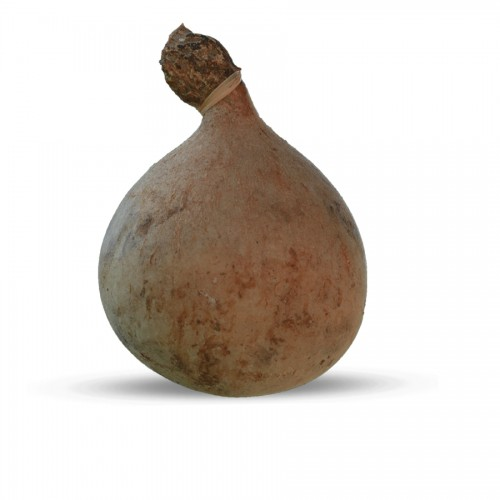 Caciocavallo Podolico in...